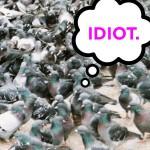 Honking At Pigeons.
